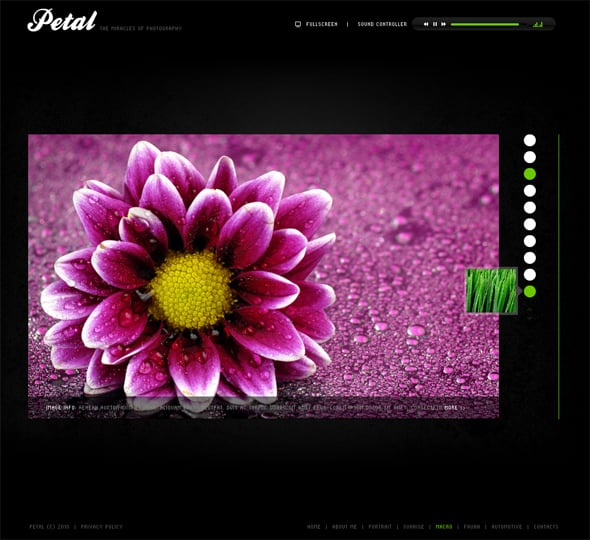 flash-cms-template-29290-01