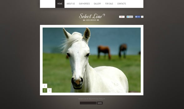 Website Template for Horse Breeding