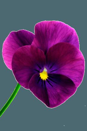 Optimizilla - Image Compression Services