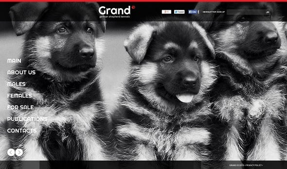 Create a website for dog breeders - Black-and-White Web Template