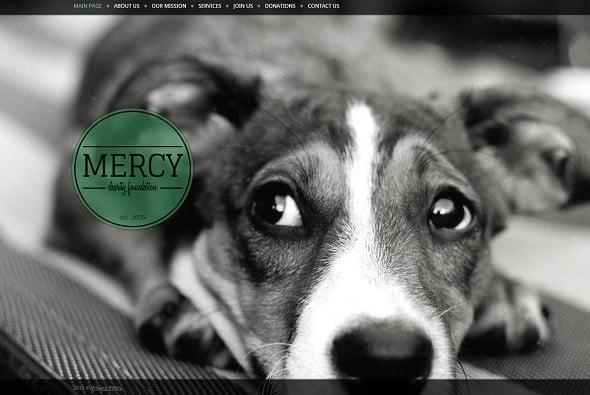 Create a website for dog breeders - Monochrome Website