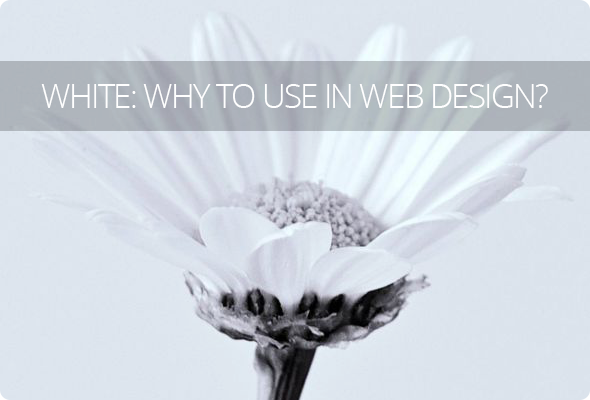 White in Web Design