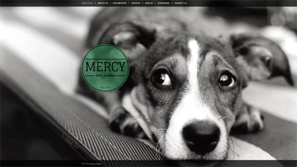 Animal Charity Web Template