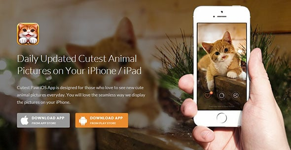 CutestPaw Emotional Web Design
