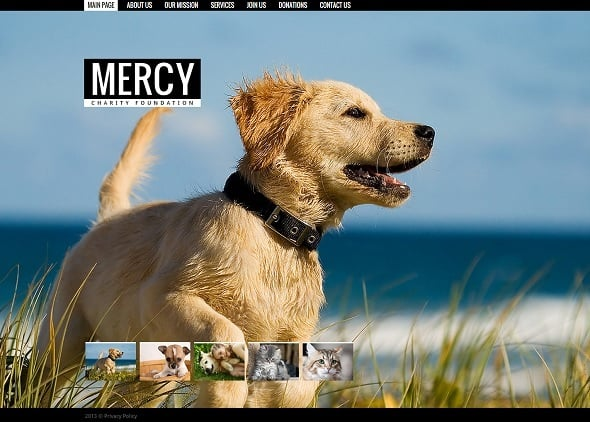 Create a website for dog breeders - Website with Slider
