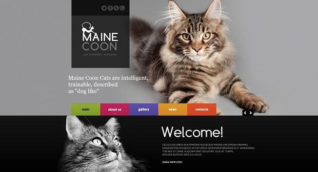 MotoCMS Independence day promo - Cat Breeder Website