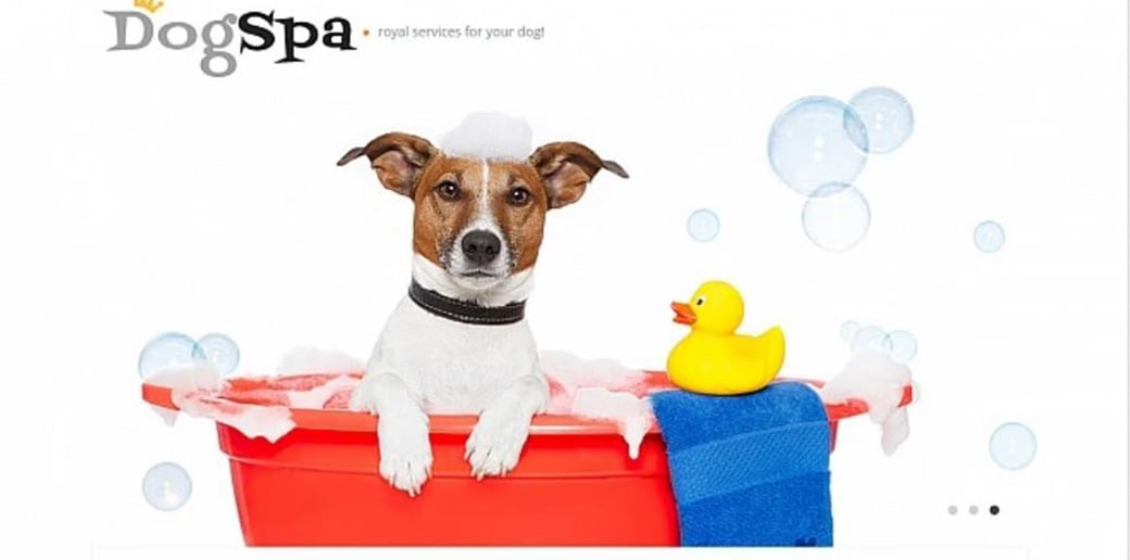 dog spa design