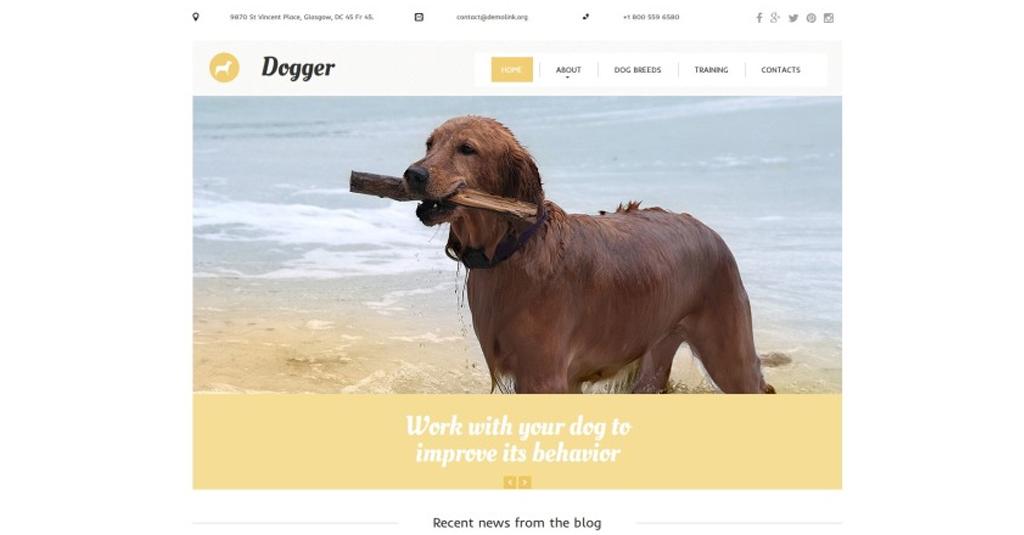 website vorlage hundetrainer