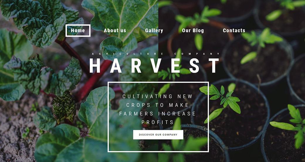 Определите свою целевую аудиторию Harvest шаблон изображение