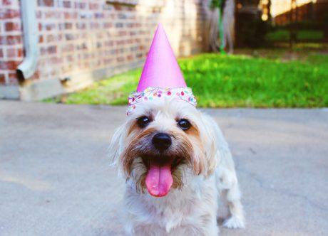 Veterinary Website Design and Pet Grooming Websites - Useful Tips