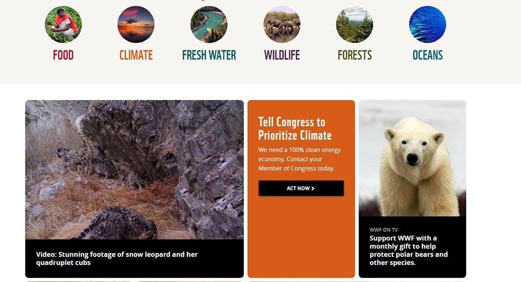 wildlife charity website